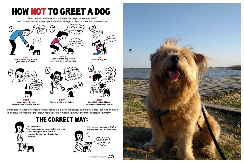 lili chin - doggiedrawings.net